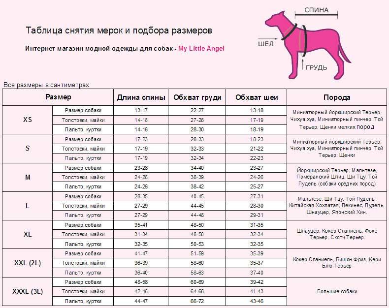 Какую породу собаки выбрать, чем руководствоваться при выборе собаки, какая порода подойдет именно тебе, как правильно выбрать собаку