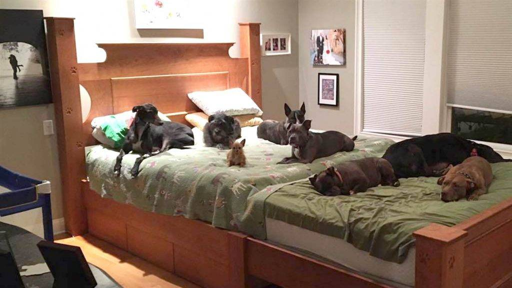 Почему собака начала писать на диван. как отучить собаку писать на кровать и что делать если не получается. проблема в физиологии