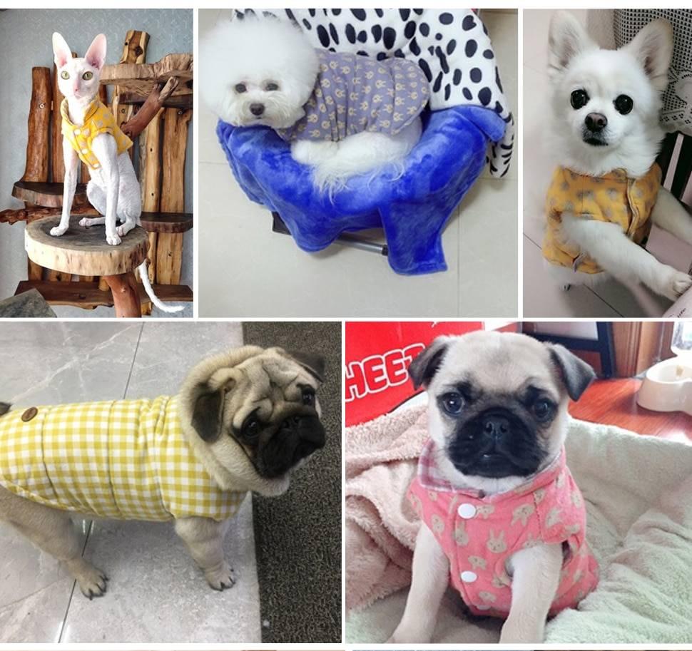 Собачья мода одежда для малышей