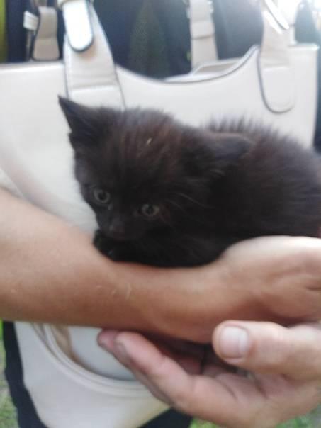 5 способов отдать кошку и почему нельзя выгонять на улицу