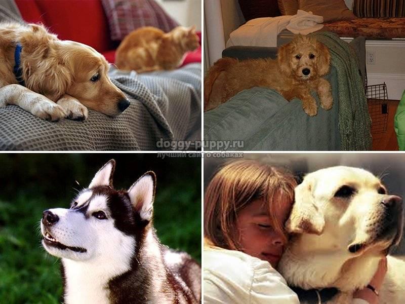 Какую породу собак выбрать для квартиры: советы начинающему владельцу
