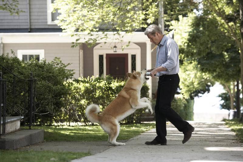 Хатико - порода собаки акита-ину (фото): отличный компаньон и своенравный друг