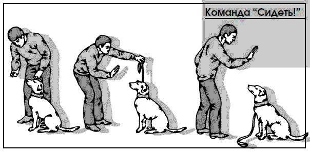 Техника обучения щенков и взрослых собак выполнению команды «ко мне»
