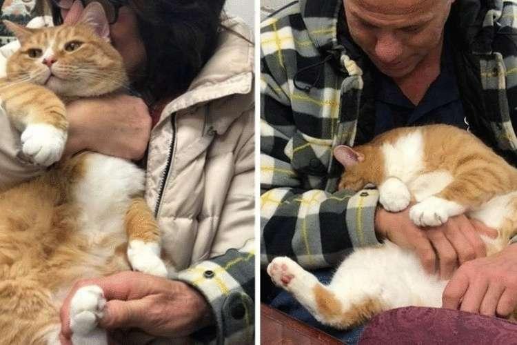 Как разговаривать с котами и кошками? ученые нашли ответ