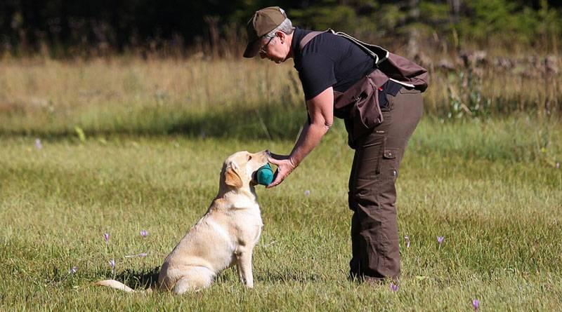 Как научить собаку команде апорт, инструкция и видео