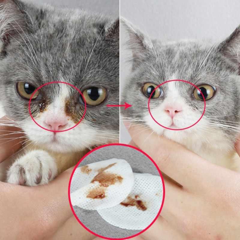 У кошки воспалился глаз: чем лечить и что делать, капли при воспалении