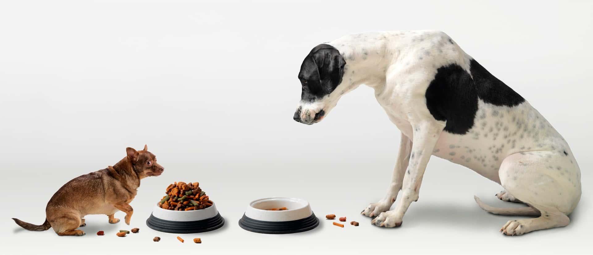 Чем отличается собачий корм от кошачьего: разница в сухом и консервированном корме для собак и кошек