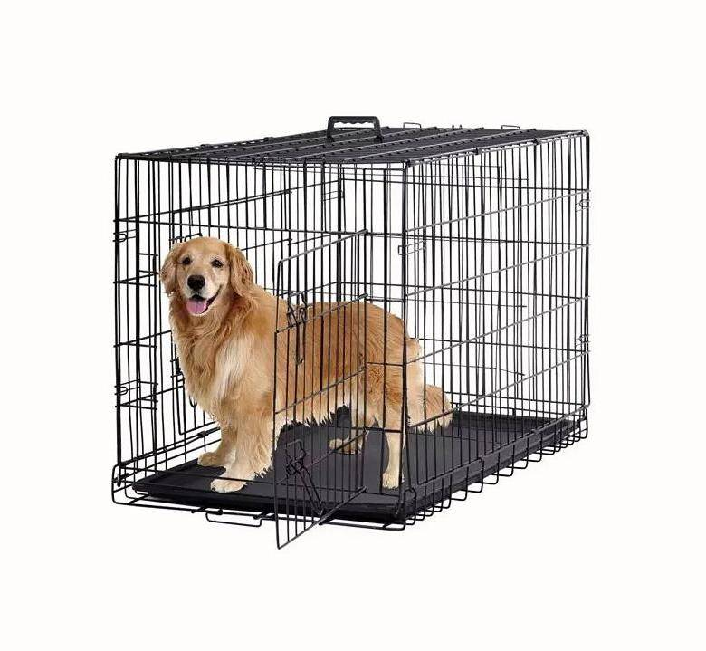 Топ-60 лучших собак для квартиры