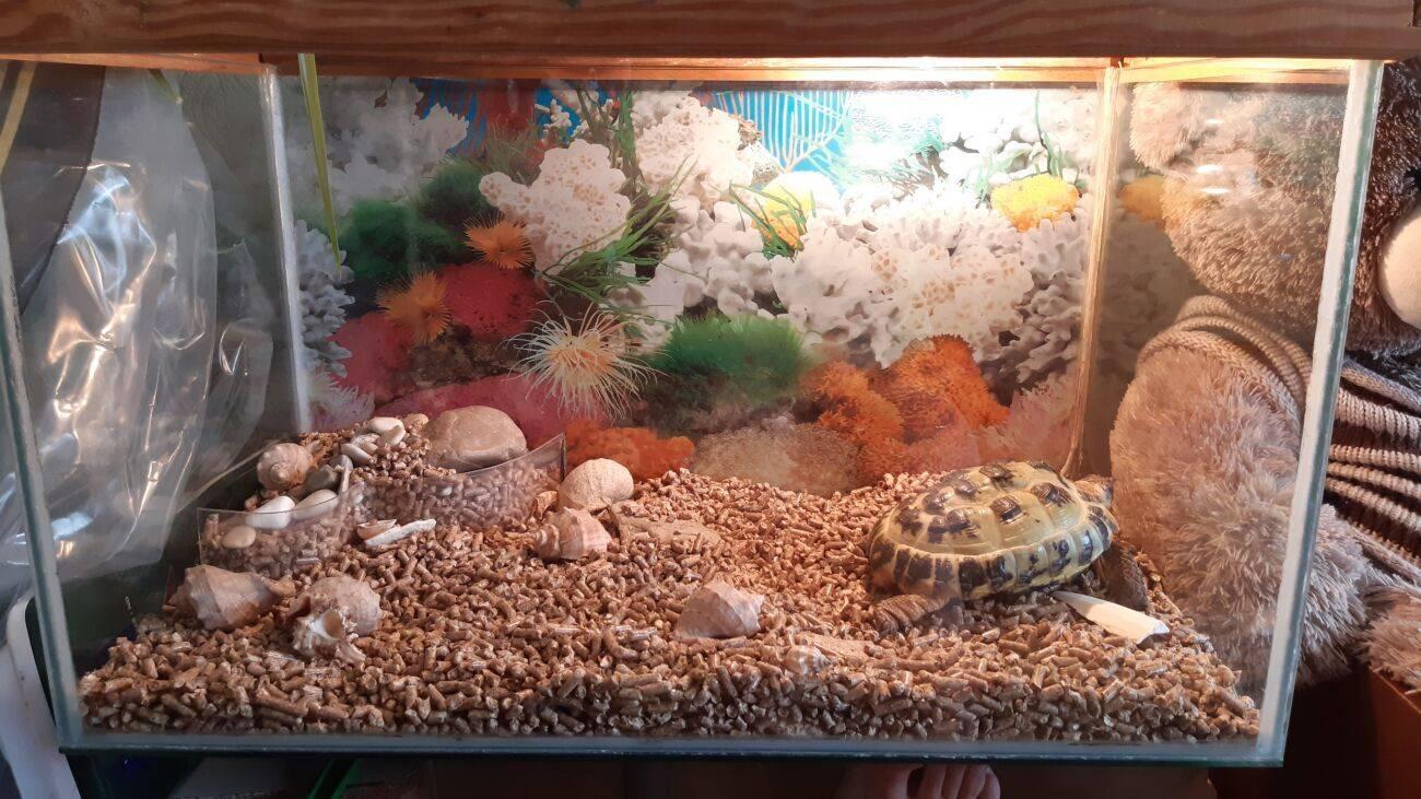 Террариумы для сухопутных черепах террариумы для сухопутных черепах