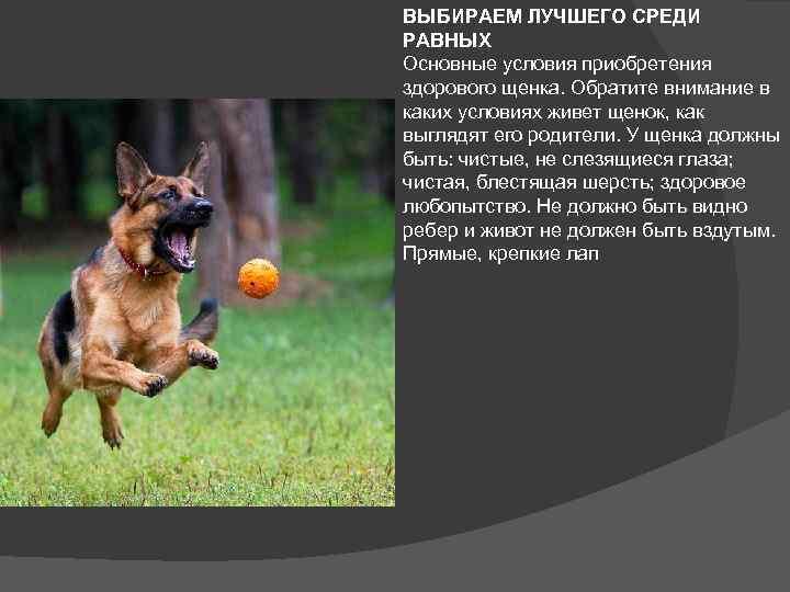 ᐉ алиментный щенок что это значит? - zoomanji.ru