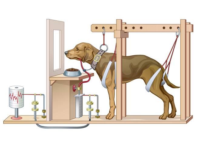 Собака павлова суть эксперимента   что говорят насекомые