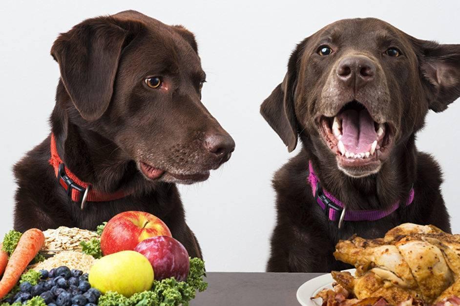 Можно ли кормить собаку свининой: какие субпродукты подходят для животного