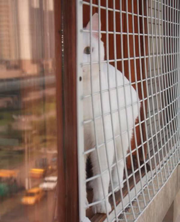Что такое сетка на окна антикошка, виды и установка