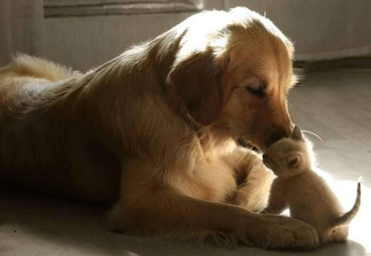 5 вещей, которые хочет сказать вам собака, когда трется о вас носом