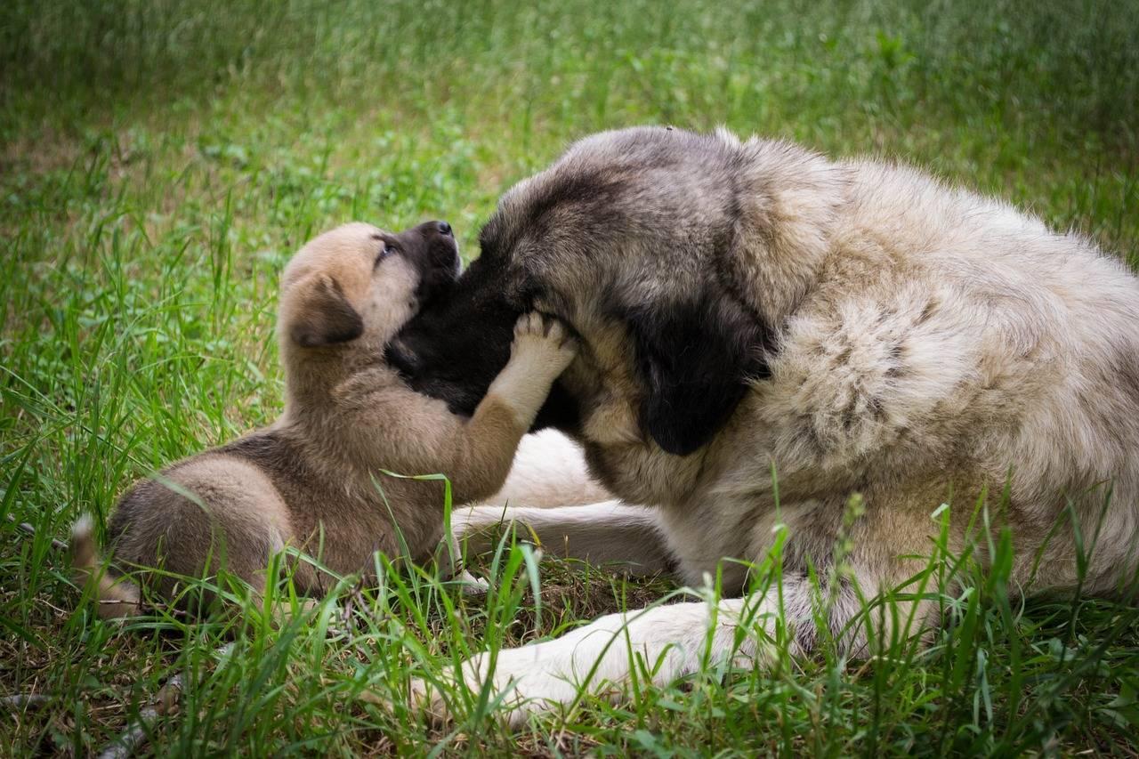 С какого возраста хозяева отдают маленьких щенков: время отлучения от матери
