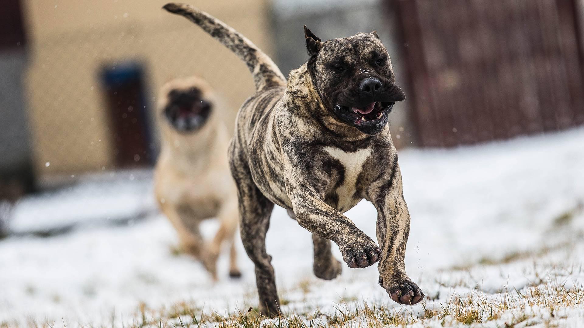 5 пород собак с обманчивой внешностью: они совсем не такие какими кажутся