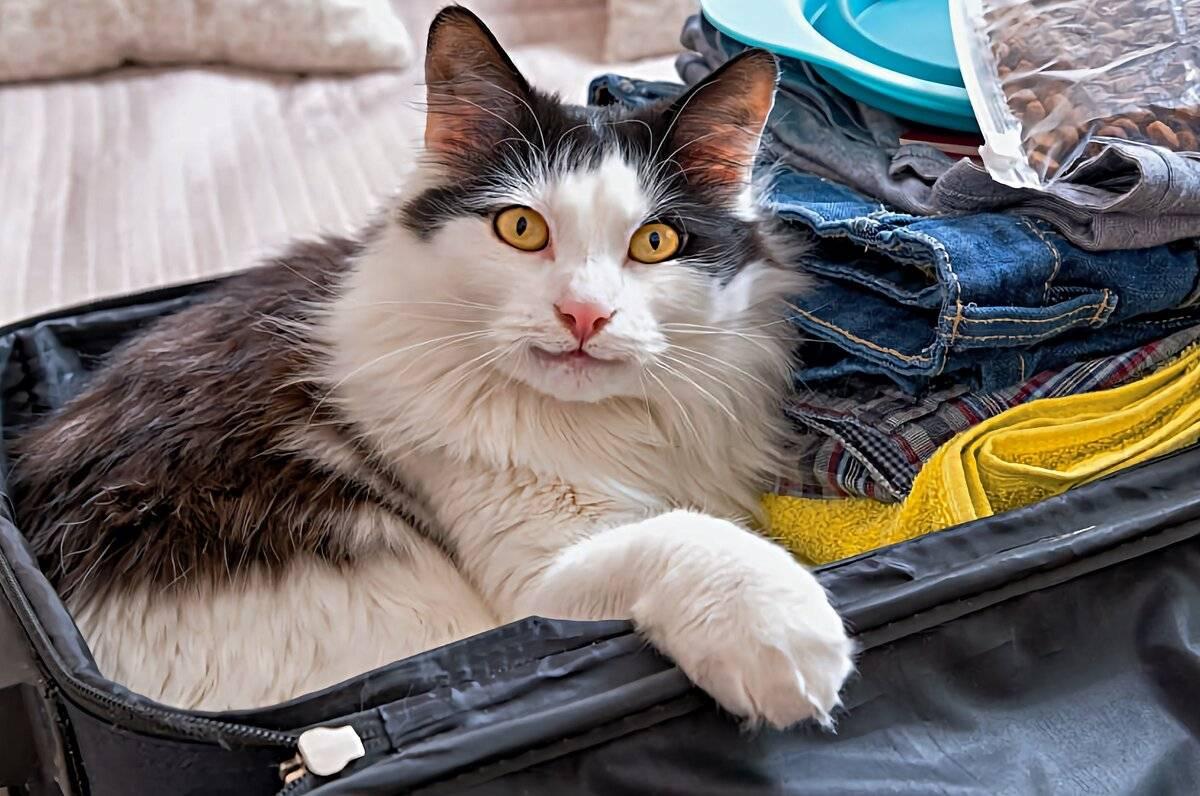 11 признаков того, что ваша кошка вас недолюбливает :: инфониак