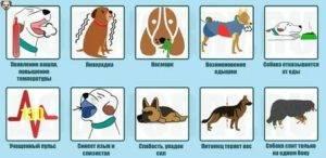 Причины кашля у собак, диагностика и лечение