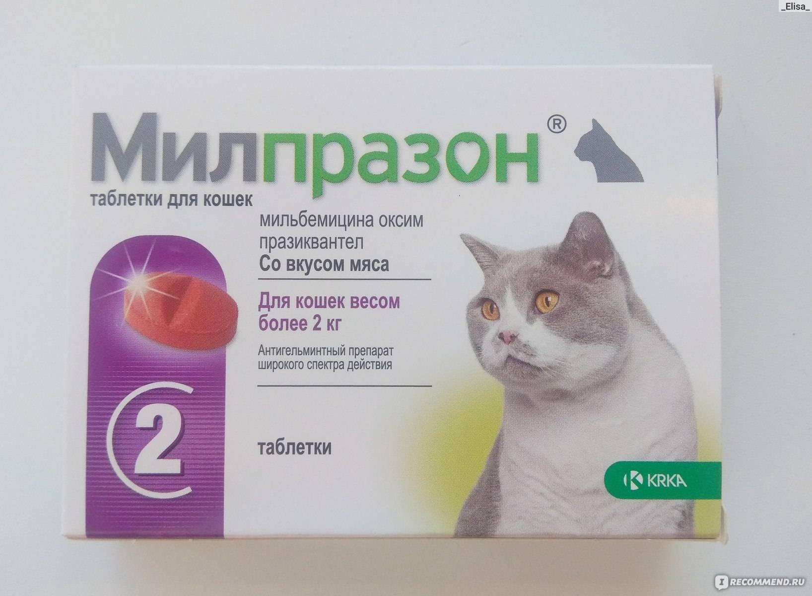 Милпразон для собак: инструкция по применению таблеток milprazon с дозировкой, отзывами ветеринаров и ценой. как давать препарат щенкам крупных и мелких пород?