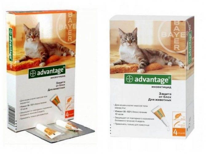 Адвантейдж для кошек – назначение, инструкция, отзывы
