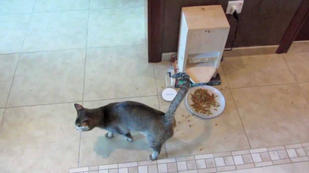 Автоматическая кормушка для кошек: описание устройства, виды автокормушек