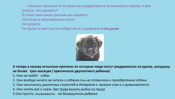 На что обратить внимание при выборе щенка