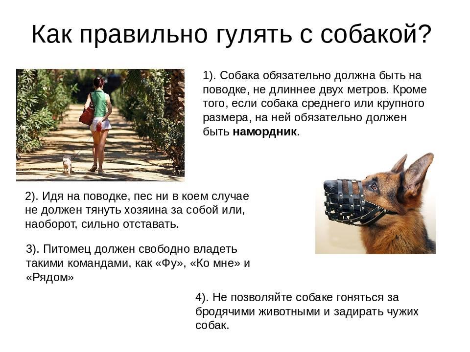 Собака в доме - приучение к одиночеству.