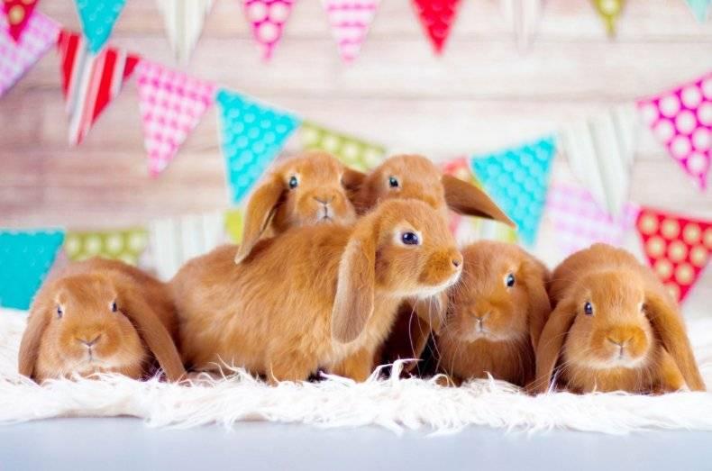 Как лучше всего называть кроликов-девочек и кроликов-мальчиков