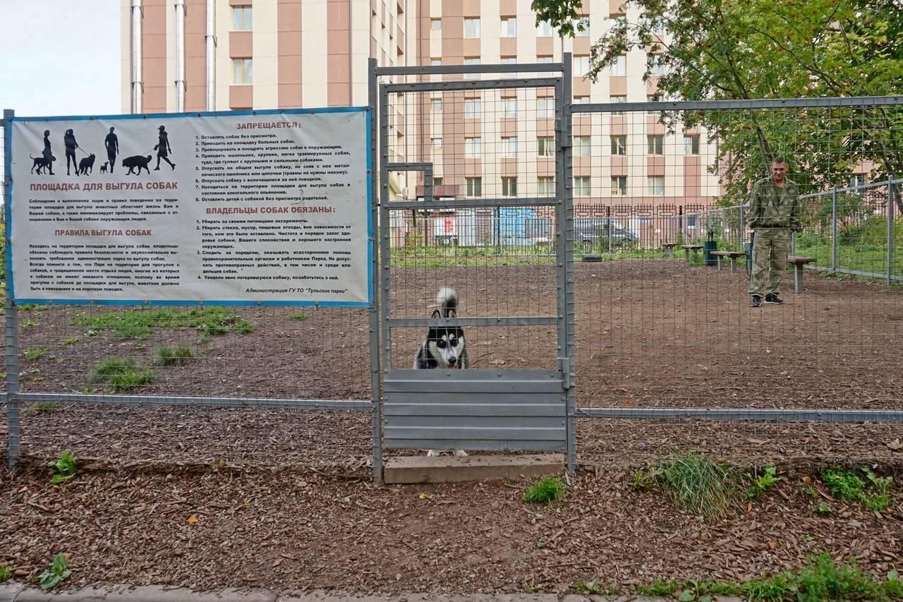 Что делать, если на детской или спортивной площадке выгуливают собак