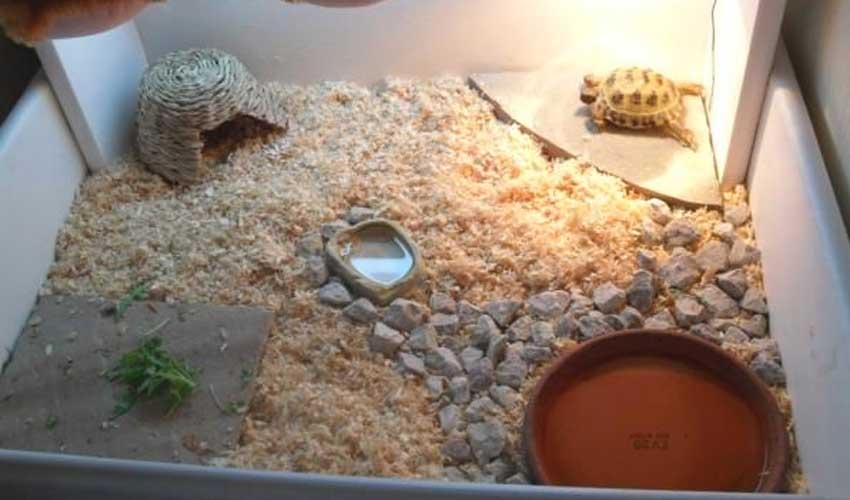 Аквариум для красноухой черепахи своими руками: как обустроить