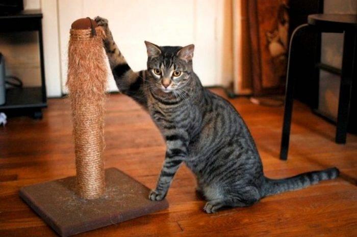 Как отучить кошку драть обои и мебель, основные причины и что делать