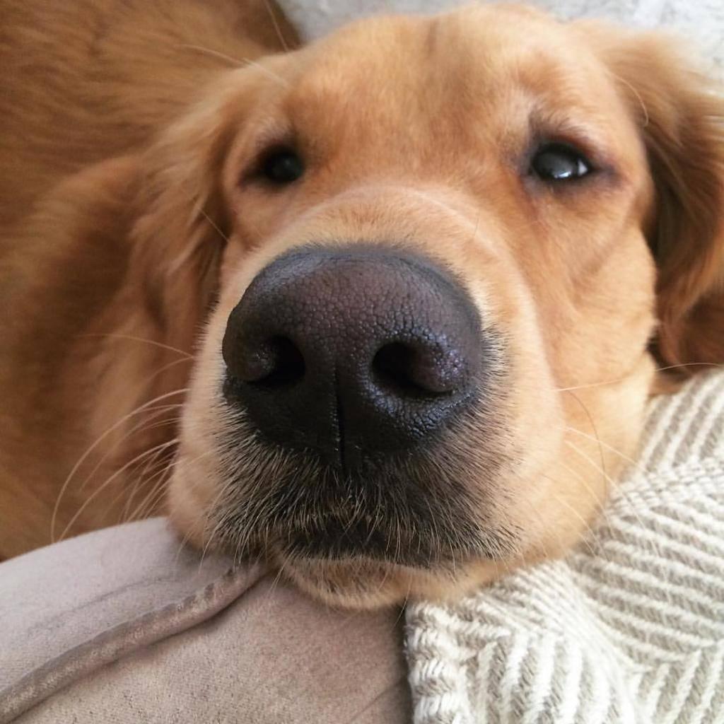 Топ 7 причин почему у собаки сухой нос