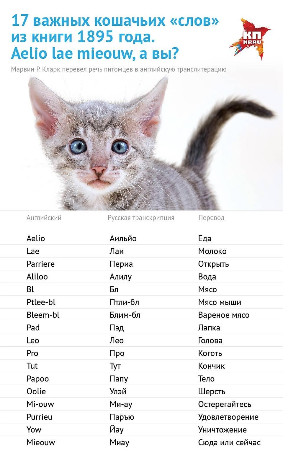 Как назвать кота белого цвета: перечень популярных, красивых и прикольных кличек