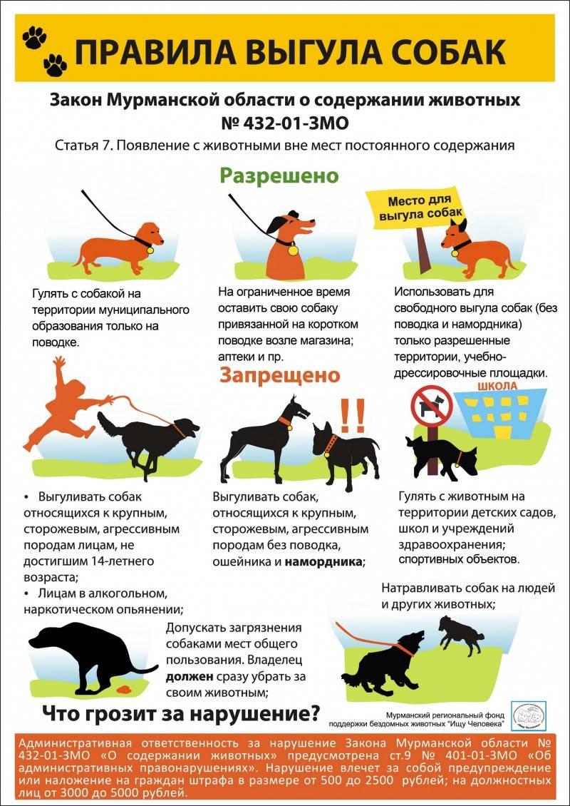 Что делать, если на детской или спортивной площадке выгуливают собак - вместе