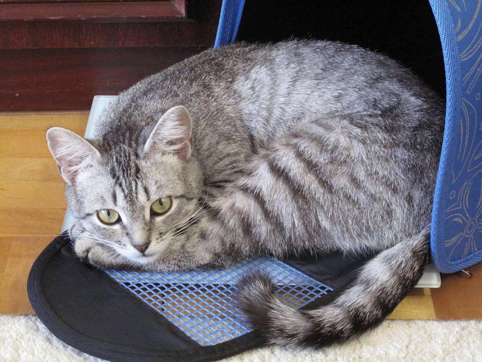 Спят на одежде хозяина: несколько странных кошачьих привычек и их значение