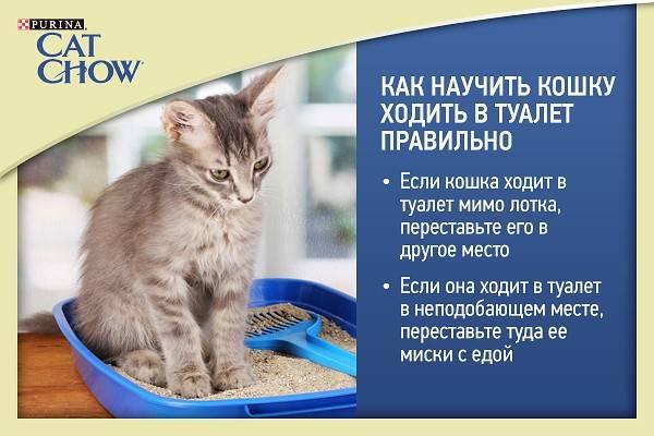 ᐉ 8 причин, почему кот или кошка перестали ходить в лоток: причины и что делать - kcc-zoo.ru