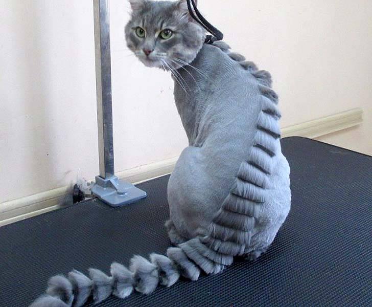 Нужно ли стричь кота