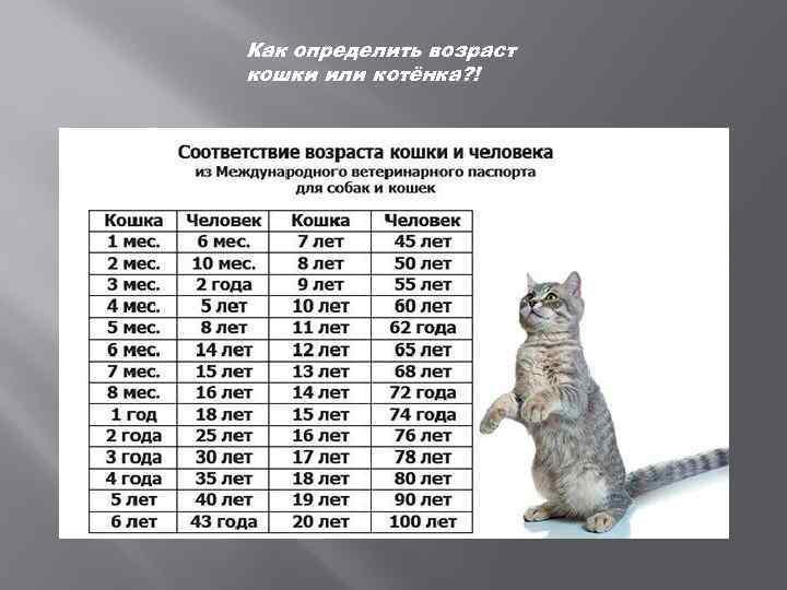 Как определить возраст кошки по внешним признакам