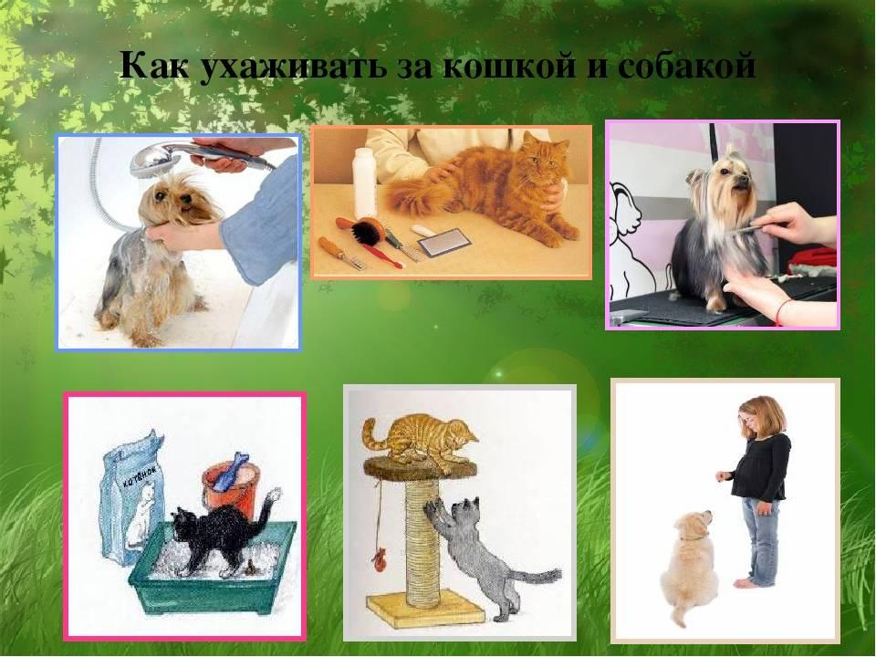 Как часто нужен уход за ушами собаки, а также какие лосьоны, капли и другие средства применяются в домашних условиях