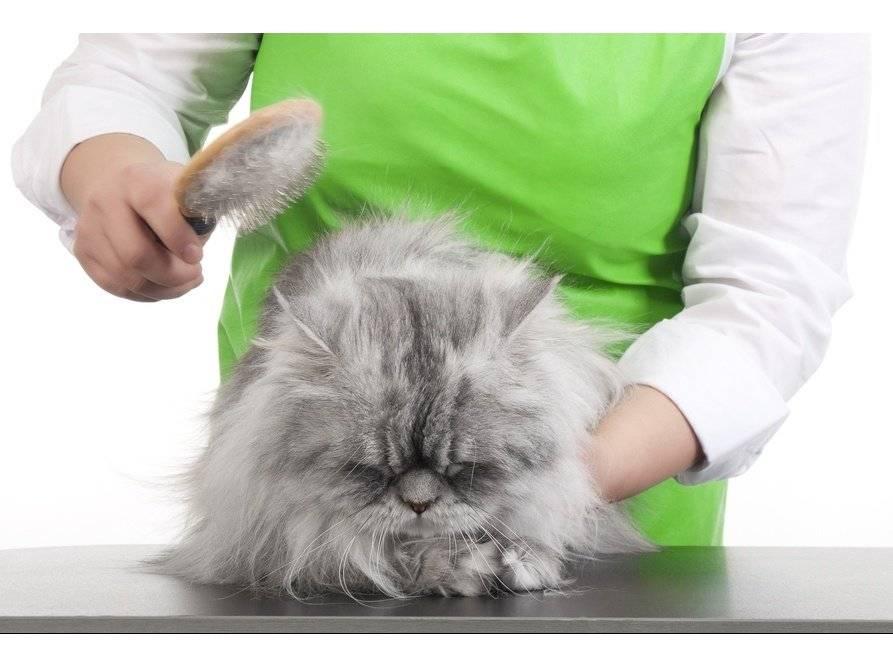 Колтуны у кошки: причины сваливания шерсти в комки, что делать, способы удаления