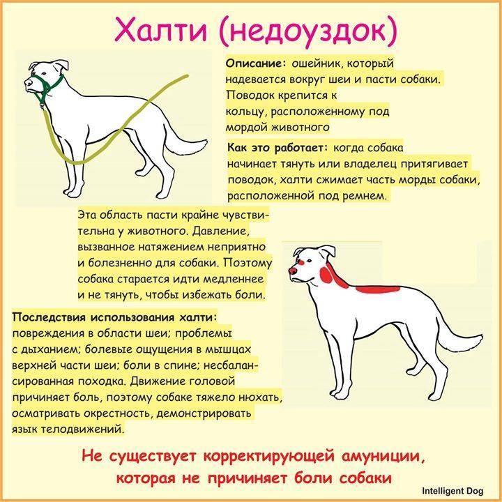 Недоуздок для собак: как определить размер и сделать халти своими руками