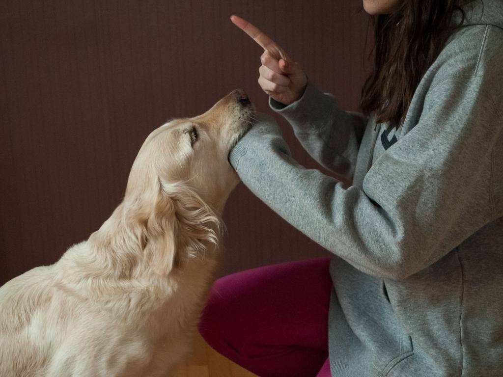 Как наказать собаку: воспитание, методы и средства, советы опытных кинологов