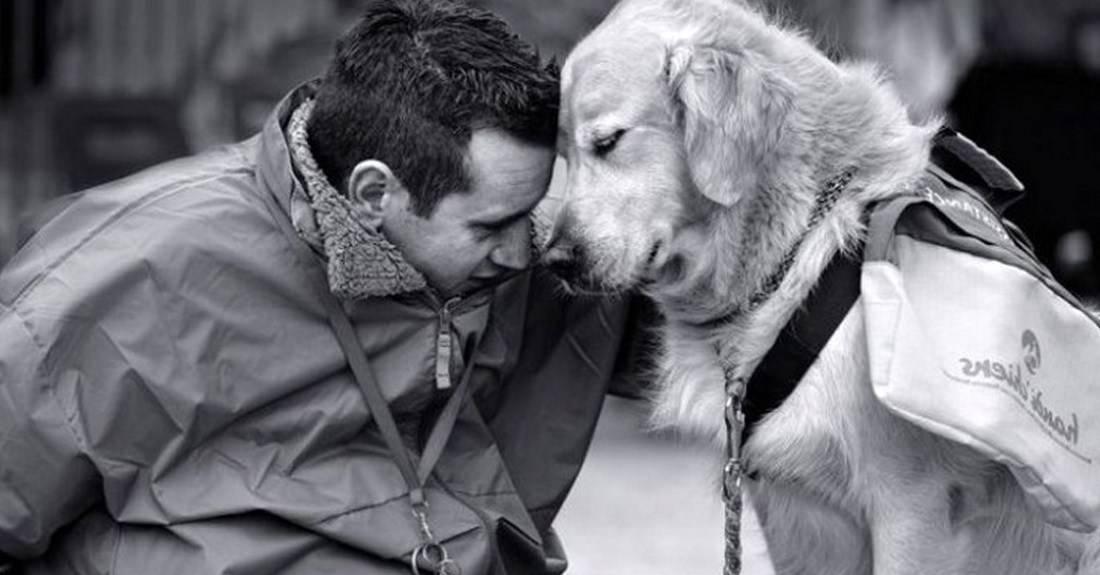 Самые преданные и верные породы собак — топ 10