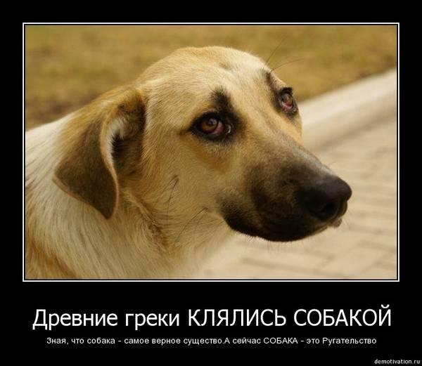 Как понять язык собаки? | сайт о маленьких собачках и не только