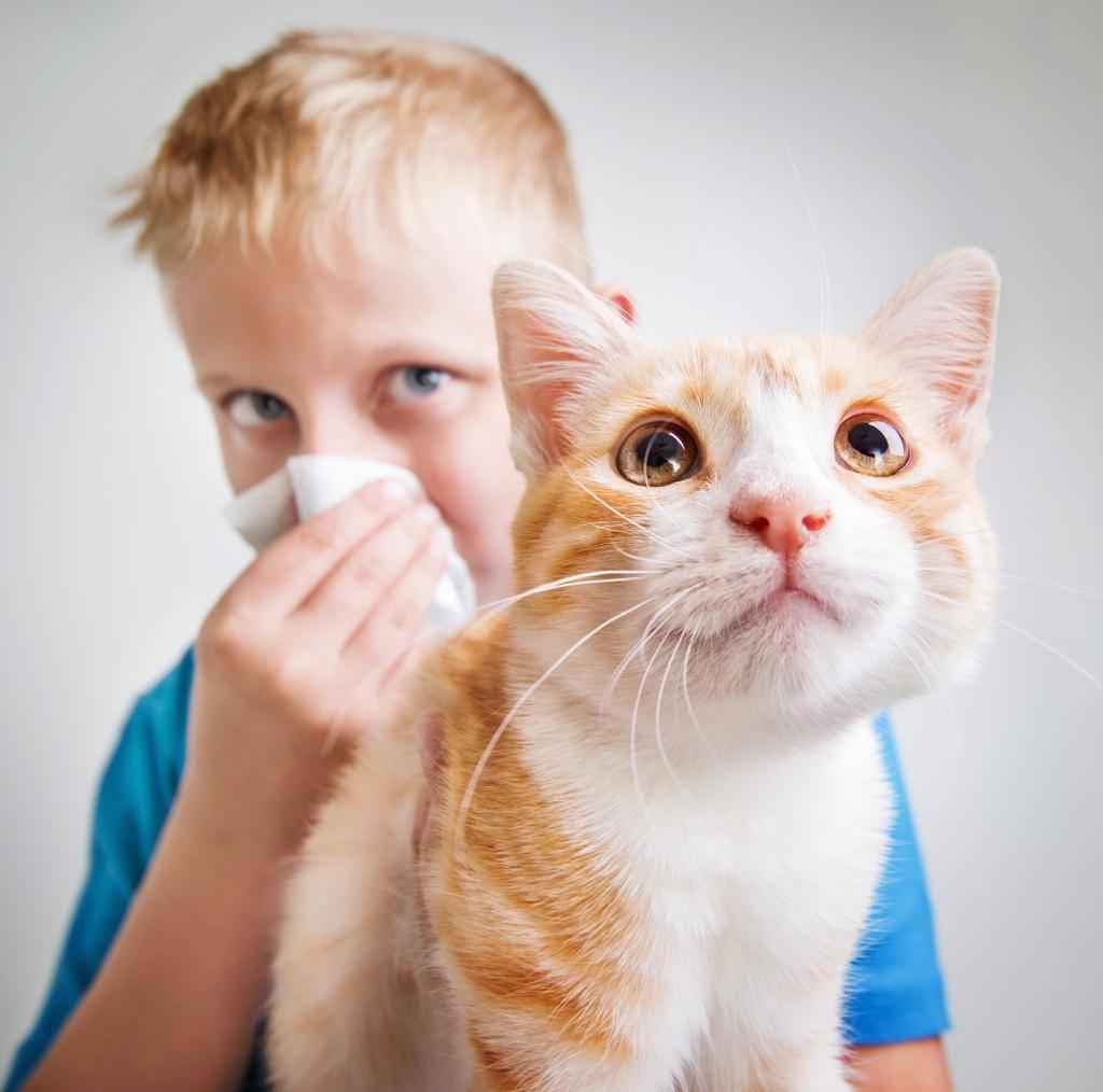 Чем опасна аллергия на кошек – симптомы проявления и способ навсегда избавиться от нее