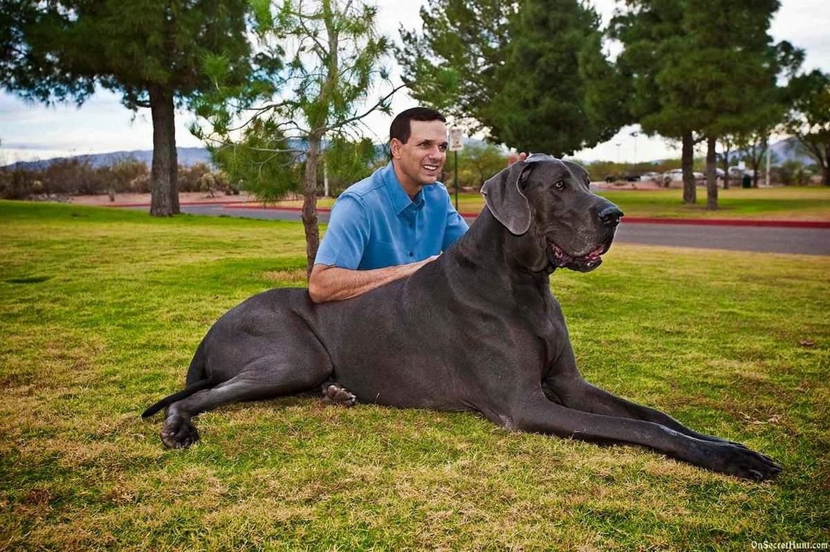 Самые большие собаки в мире – топ-10 пород