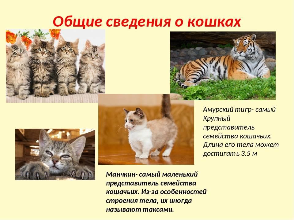 Наиболее интересные факты о кошках для детей и взрослых, особенности животных