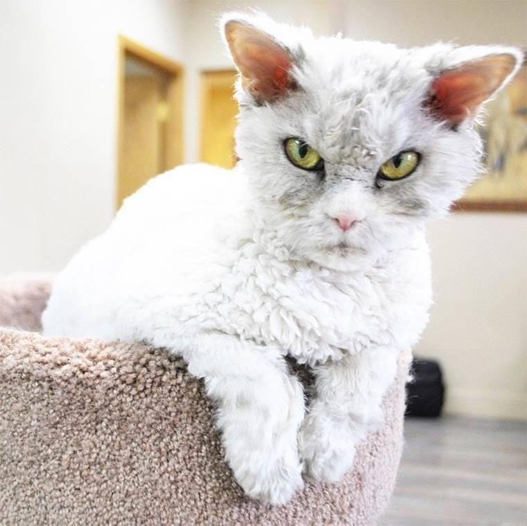 Самые красивые породы кошек (топ-21)