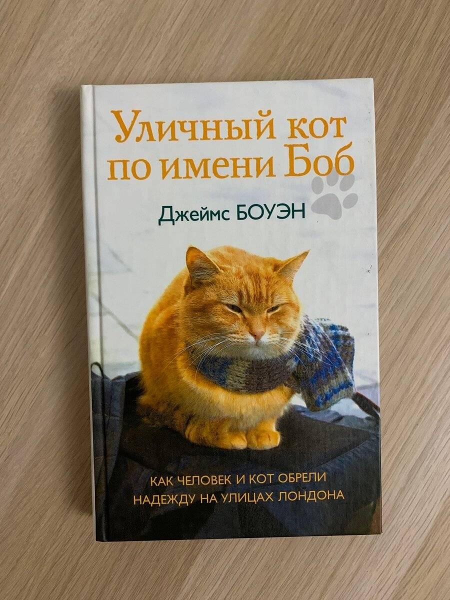 Память и чувства кошки    | все о кошках