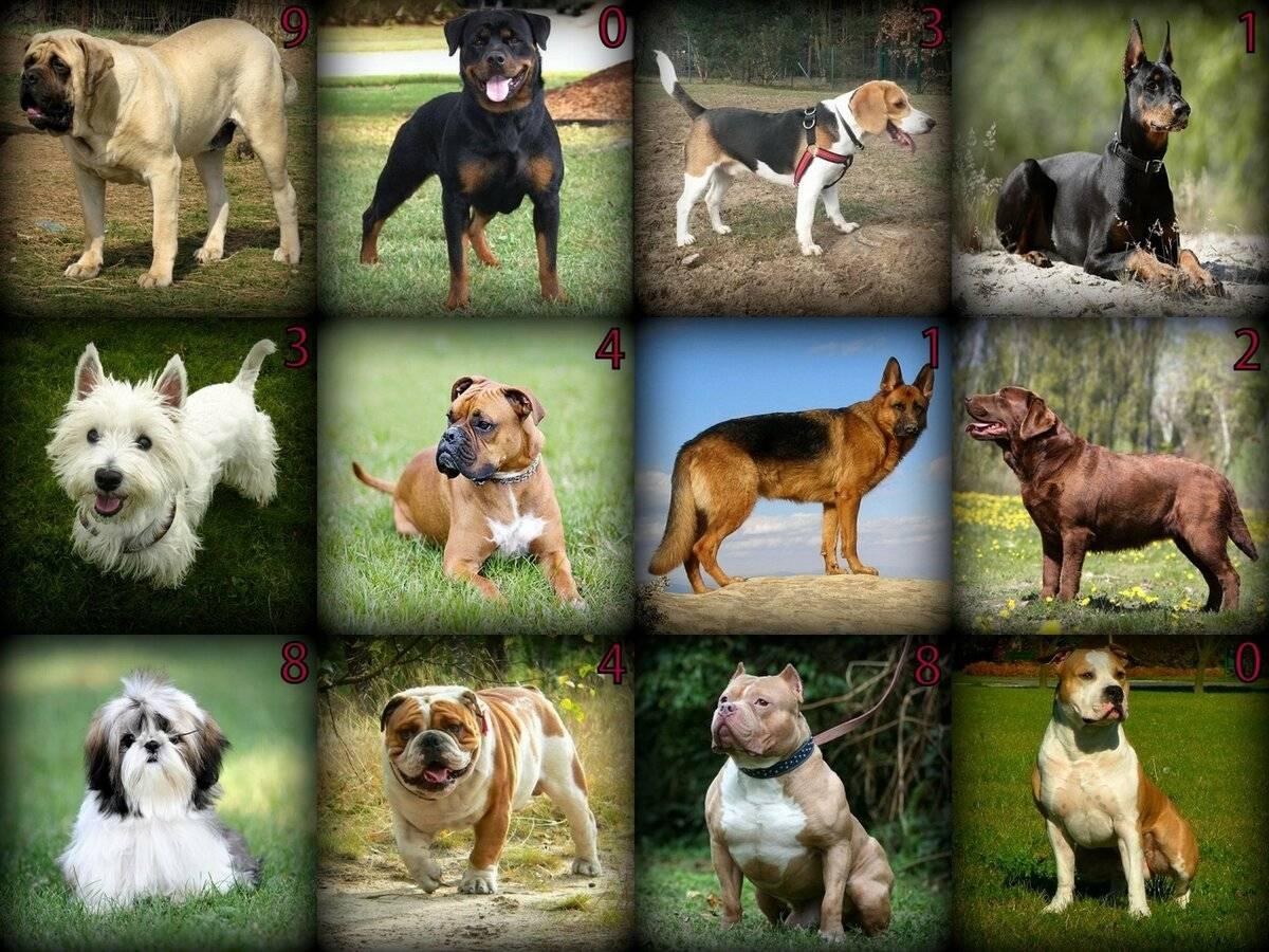 Маленькие породы собак